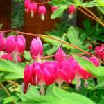 """Hearts in flowers"" by Swmr152974"