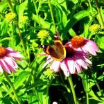 """""""Butterfly on a flower"""" by Swmr152974"""