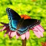 """""""Butterfly"""" by Swmr152974"""