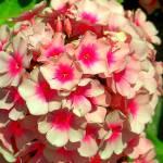 """""""Flower"""" by Swmr152974"""