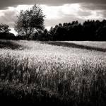 """Summer Dreamland in Grey"" by julieann"