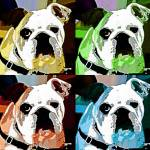 """Clyde The Bulldog"" by 12Steps"