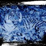 """Grunge Tiger Print"" by 12Steps"