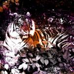 """Tiger_in_the_morning_sun_Grunge_6"" by 12Steps"