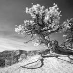 """Bryce Canyon Tree - infrared landscape"" by miir"
