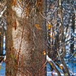 """Tree Trunk"" by jebrunner58"