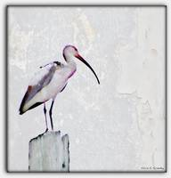 White Ibis Abstract