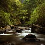 """Iao Valley Stream"" by chrisirmo"