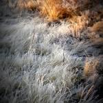 """Wintery"" by photosbybritney"