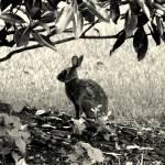 """""""Bunny"""" by NatashaRuz"""