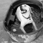 """""""Water dog"""" by NatashaRuz"""
