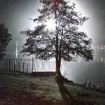 """Roath Lake Drizzle"" by ajcronin"