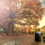 """Roath Park, Autumn Colours 2"" by ajcronin"