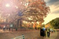 Roath Park, Autumn Colours 2