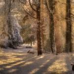 """Roath Wild Gardens in the snow 2"" by ajcronin"