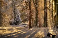 Roath Wild Gardens in the snow 2