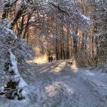 """Roath Park Wild Gardens in the snow"" by ajcronin"