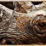"""Black Rhinoceros"" by CelticOriginsPhotography"
