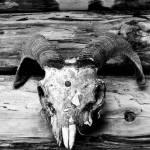 """""""Memento mori 1"""" by bkdc"""