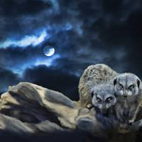 Midnight Watchers Art Prints & Posters by Ellen Paintings