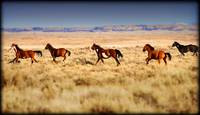 Sand Wash Basin Wild Mustangs