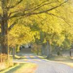"""Late Autumn Finale 471"" by photographybydonna"
