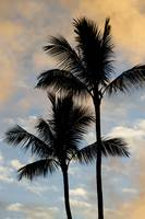 Hawaii Palm Sunset