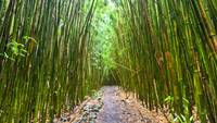 Bamboo Forest Trail Hana Maui Hawaii 2