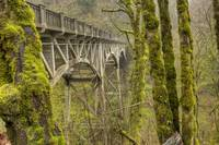 Latourell Falls Bridge Tree Moss Gorge Oregon