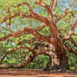 """Angel Oak"" by DrewCastelhanoPhotography"