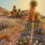 """Sunrise at Joshua Tree"" by StudioSinaloa"