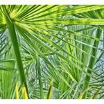 """Under the Palms"" by DaveScott"
