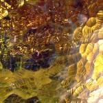 """amber"" by zacharyherrera"