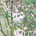 """""""Winter in Autumn"""" by shelshots"""