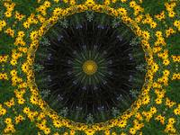 Black_Eyed_Susans_Wreath
