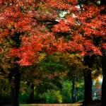 """Autumn"" by tsgentuso"
