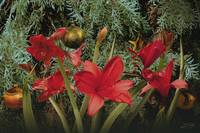 Christmas Bell Flowers