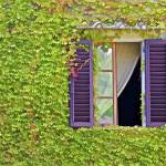 """Ivy Covered Window of Tuscany"" by Oldworldphoto"