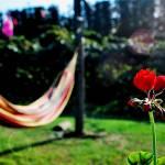 """""""Summer"""" by Kismet"""