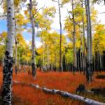 """Watercolored Aspen Grove"" by Photos4Aidan"