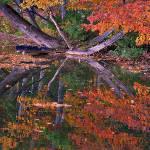 """""""Monet Vistation On The Water"""" by rosearodoe"""