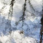 """Tiffany Wetlands Reflections Abstract"" by rosearodoe"