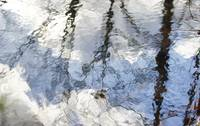 Tiffany Wetlands Reflections Abstract