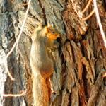 """""""Squirrel up Tree"""" by dasiygirl"""