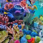 """Ocean Colors"" by dasiygirl"