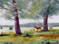 Richmond Deer Park