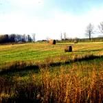 """""""Hay Field"""" by dasiygirl"""