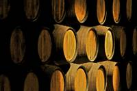 Wine Barrels of Porto