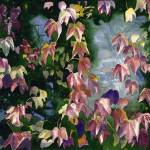 """Virginia Creeper"" by RaymondOre"