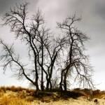 """oak stand"" by fjsjr"